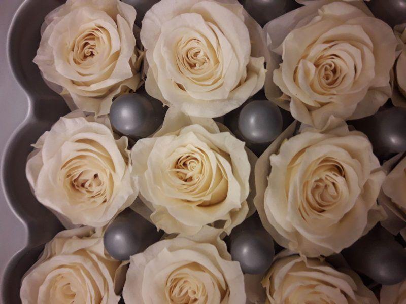rosas preservadas princess champagne