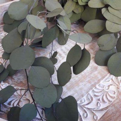 eucaliptus preservado