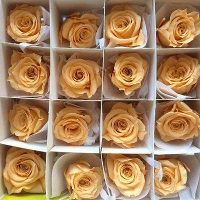 rosas preservadas princess