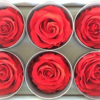 Rosas Rojas Tamaño Extra