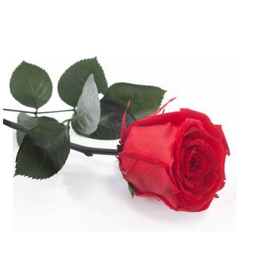 Rosa preservada con tallo
