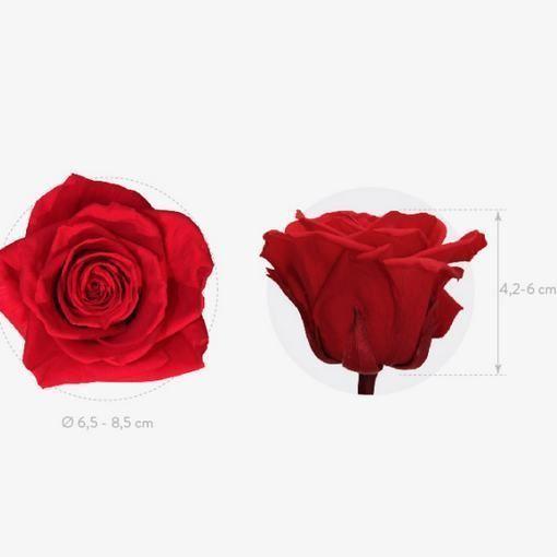 Rosas preservadas premium