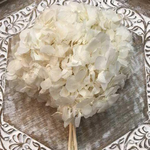 Hortensia Preservada Premium Blanca