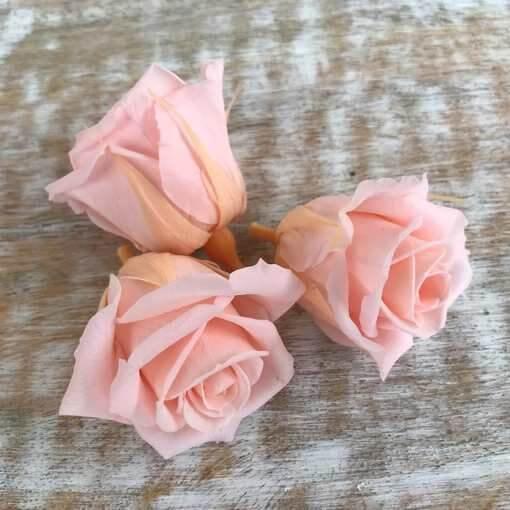 Rosas preservadas talla Mini Color Rosa