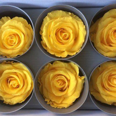 Rosas Amarillas Tamaño Extra 6 unidades