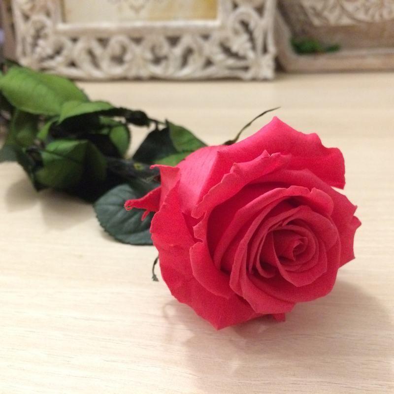 Rosa preservada Rosa Oscuro con tallo estuche acetato