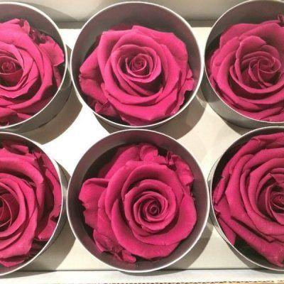 Rosas Purpura Tamaño Standard
