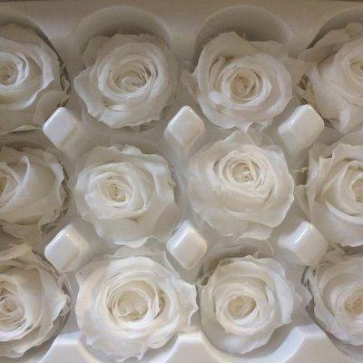 Rosas preservadas talla Mini Color Blanco