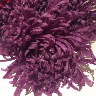 Crisantemo Preservado Anastasia Purpura