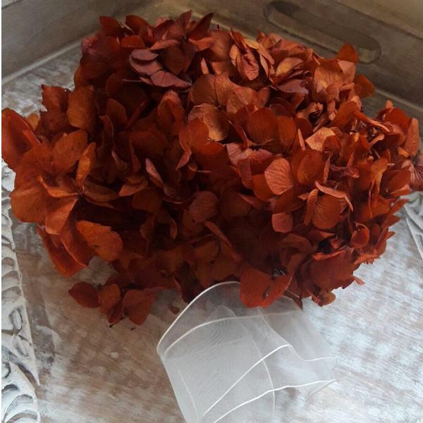 Hortensia Preservada Standard Rojo Otoño