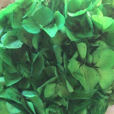 Hortensia Preservada Premium Verde