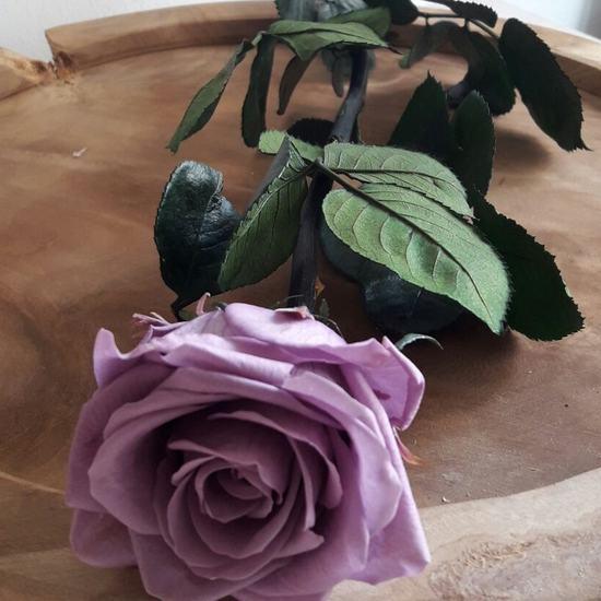 Rosa preservada Lila con tallo estuche acetato