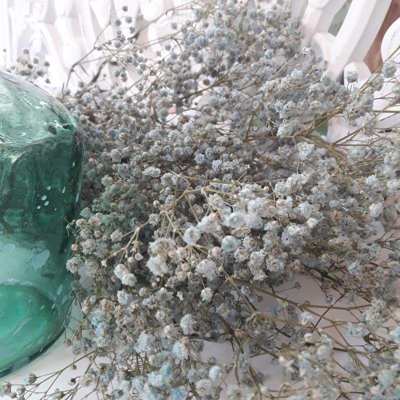 Paniculata Preservada Azul Novia