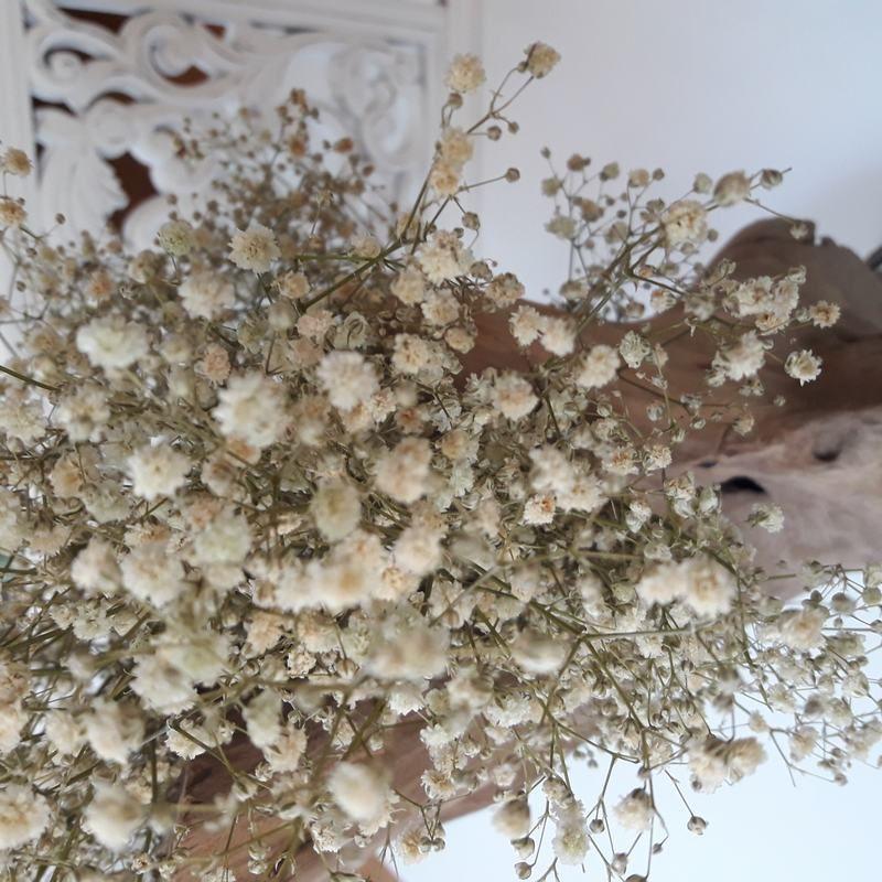 Paniculata,flores mini