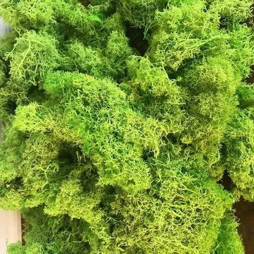 musgo preservado liquen bolsa 500 gramos Verde Lima