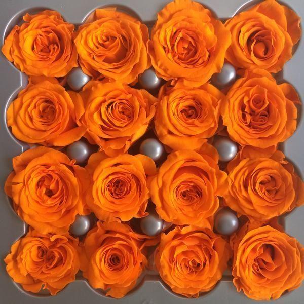 rosas princess naranjas