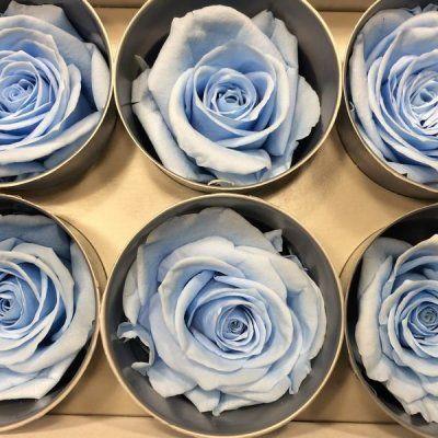 Rosas Tamaño Standard Azul Claro