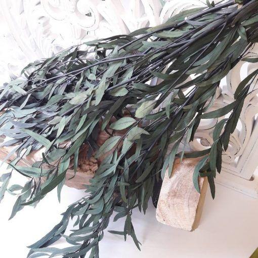 Eucaliptus preservado Ramo de Eucaliptus Nicoli Verde
