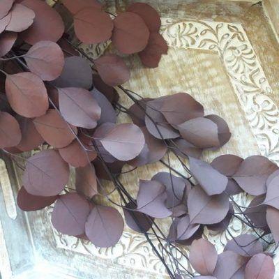 Eucaliptus preservado Ramo Eucaliptus Populus Rojo