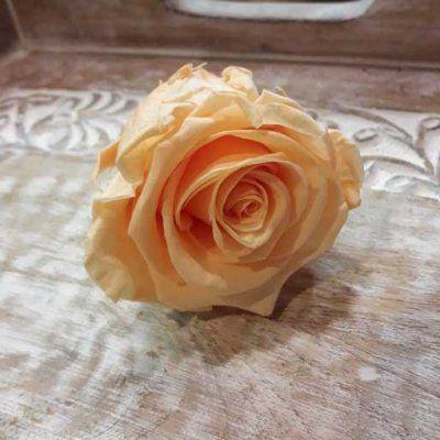 Rosa Preservada Melocotón Extra