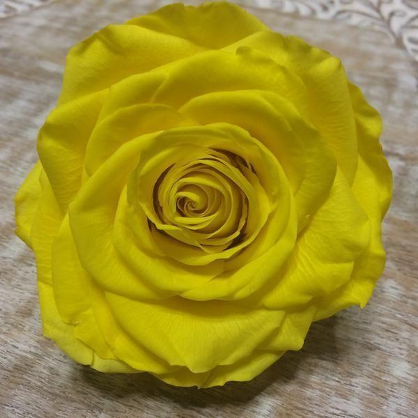Rosas preservadas Premium Amarillo Brillante