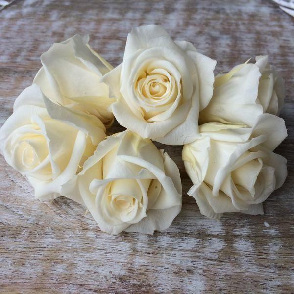 Rosas preservadas talla Mini Color Champagne