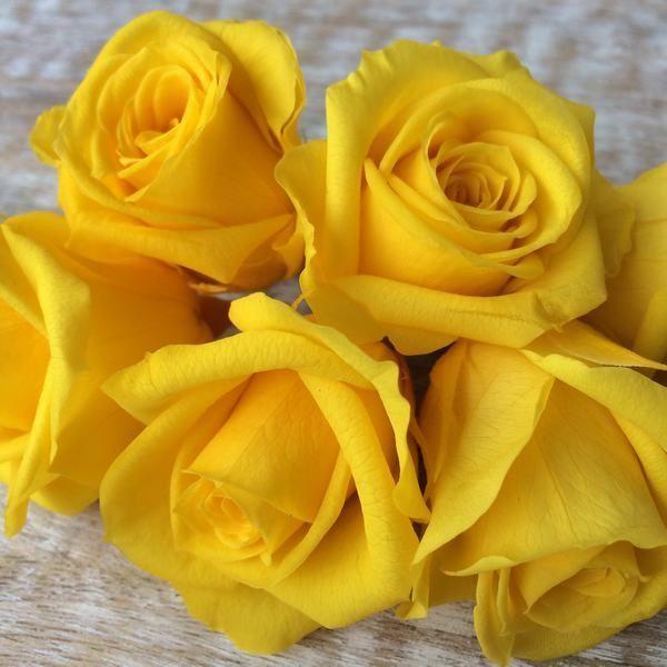 Rosas preservadas talla Mini Amarillo Brillante