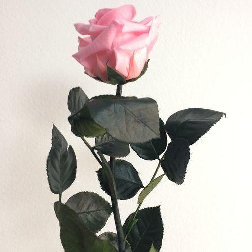 Rosa preservada con tallo Color Rosa Pastel