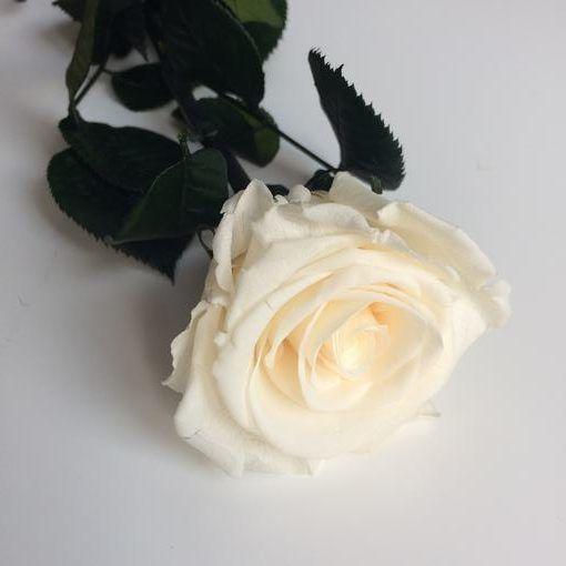 Rosa preservada con tallo Champagne estuche acetato