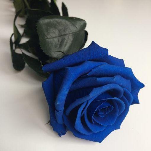Rosa preservada con tallo Azul Oscuro estuche acetato