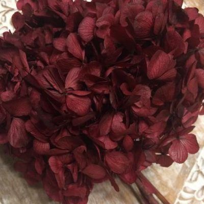 Hortensia Preservada Purpura Oscuro