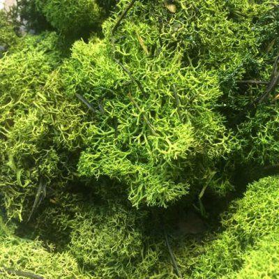 musgo preservado liquen 200 gramos Verde Oscuro