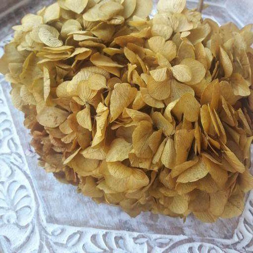 Hortensia Preservada Premium Ocre