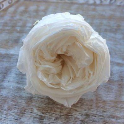 Rosa Preservada Jardín Blanca