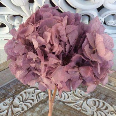 Hortensia Preservada Premium Lila