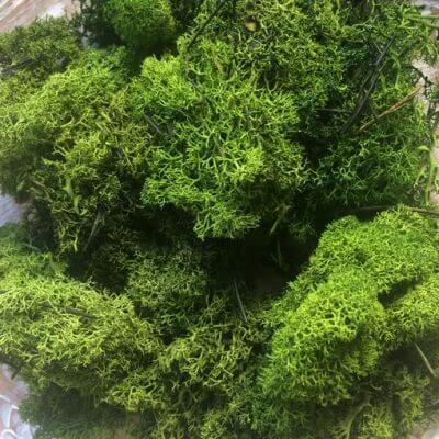 musgo preservado liquen 500 gramos Verde Bosque