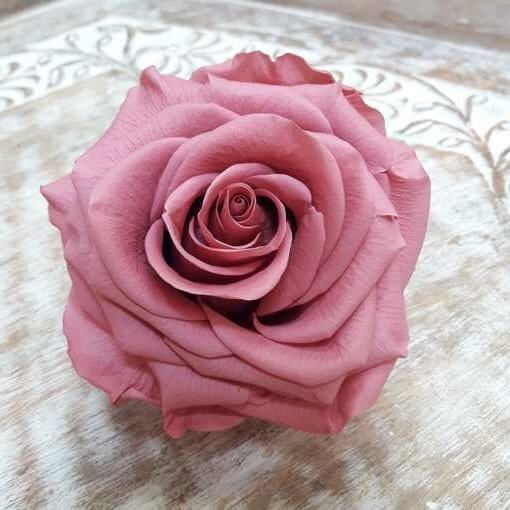 Rosa preservada Cereza Premium