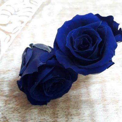 Rosas preservadas talla Mini azul