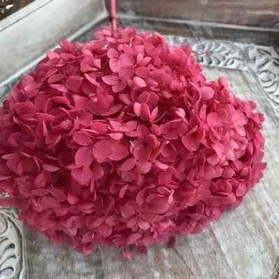 Hortensia Preservada de Tallo Extralargo. Rojo Sandia