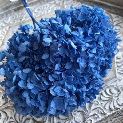 Hortensia Preservada de Tallo Extralargo. Azul Intenso
