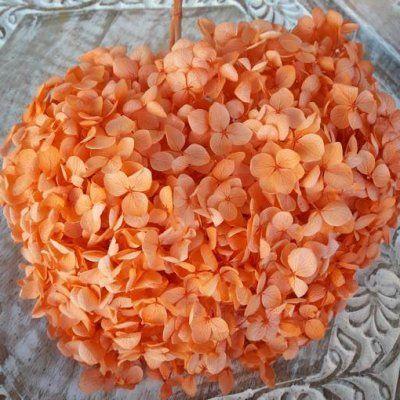 Hortensia Preservada Tallo Extralargo. Naranja