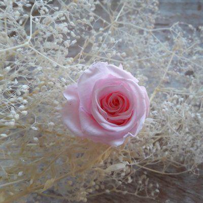 Rosas preservadas talla Mini-Mini Color Rosa