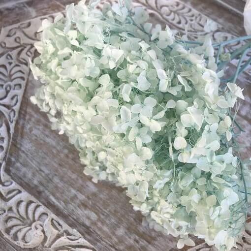 Hortensia Preservada de Tallo Extralargo. Verde Menta