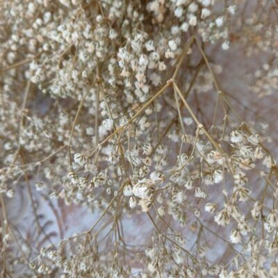 Paniculata, flores mini